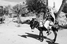 boy with donkey at wadi bani khalid :)