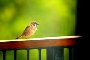 lil bird 2 wm