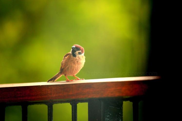 lil bird 3 wm