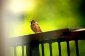 lil bird 4 wm
