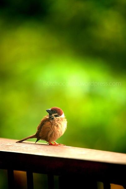 lil bird 5 wm