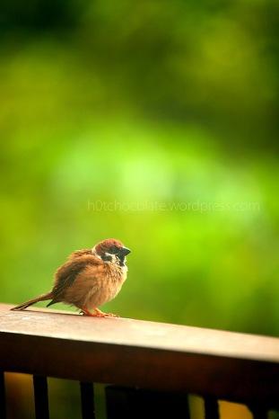 lil bird 6 wm