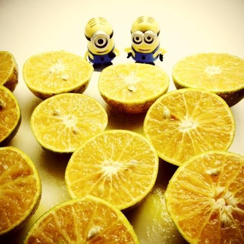 memeras jeruk