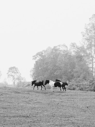kuda di aek natonang