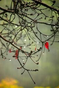 hari hujan