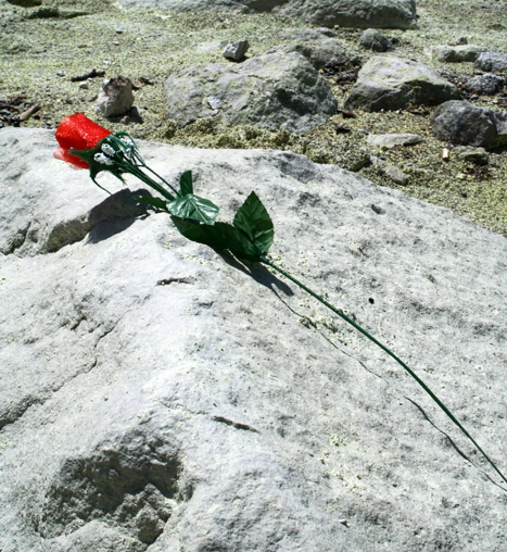 mawar terakhir
