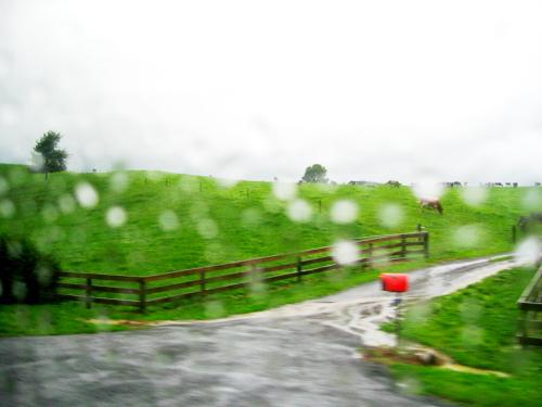 lady rain 8
