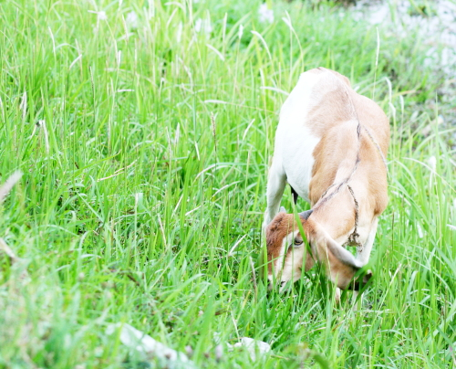 kamping di balik rumput