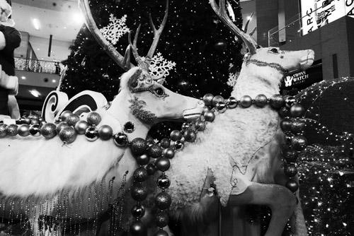 Rusa santa nan gagah.. Kira-kira dikasih makan apa ya sama Santa?