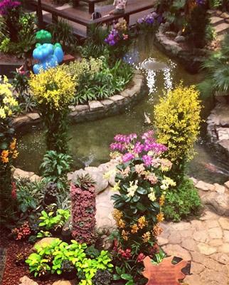 kebun-bunga-matahari-changi-10
