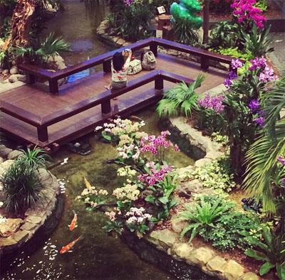 kebun-bunga-matahari-changi-7