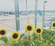 kebun-bunga-matahari-changi-8